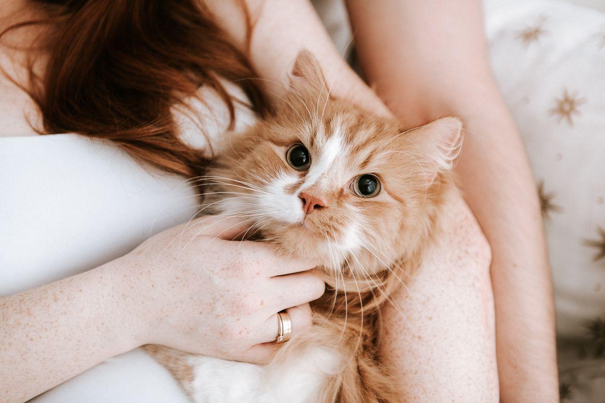 sesja ciążowa z kotem